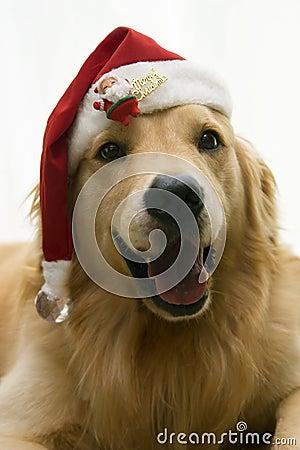 Santahond van Kerstmis