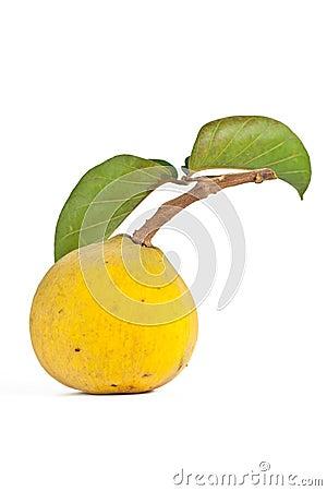 Santol fruit.