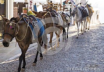 Santorini Horses Stock Photo - Image: 43880292
