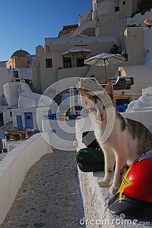 Free Santorini S Street! Stock Images - 6784094