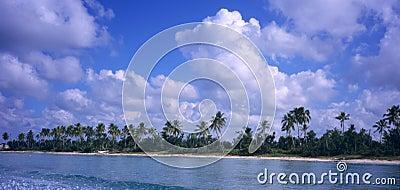 Saona island coastline -Dominican republic