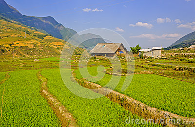 Sapa Rice crops