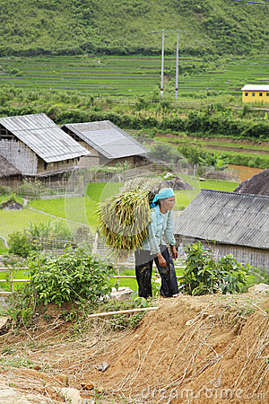 Sapa, Vietnam Editorial Photography