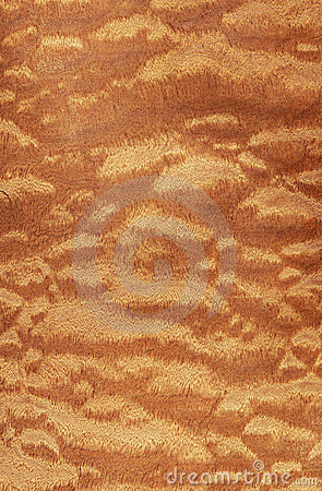 Sapele pomele (wood texture)
