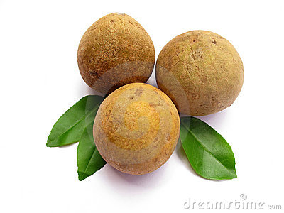 Sapodilla-Isolated