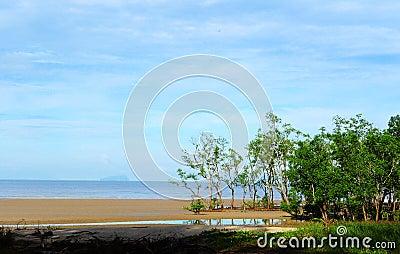 Sarawak sandy mangrove beach