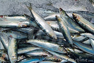 Sardine fresh fish seafood on ice sea market
