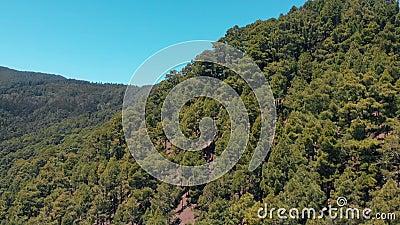 Satellietbeeld van bomen op de berg - sparren, pijnboom en andere altijdgroene naaldbomen stock footage