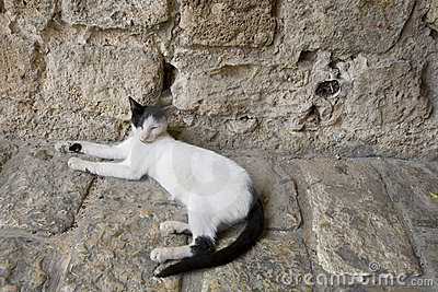 Satisfied cat at home in Jaffa Israel