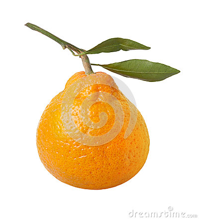 Satsuma Orange Isolated with clipping path