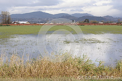 Saturated Farm Land