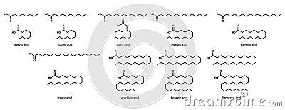 Saturated fatty acids (set): caprylic, acid, capri