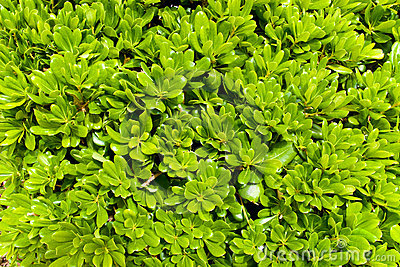 Saturated green leaves background