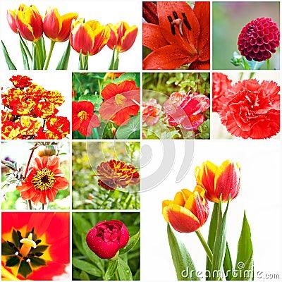 Satz Blumen