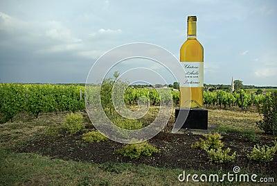 Sautern wineyard Редакционное Фото