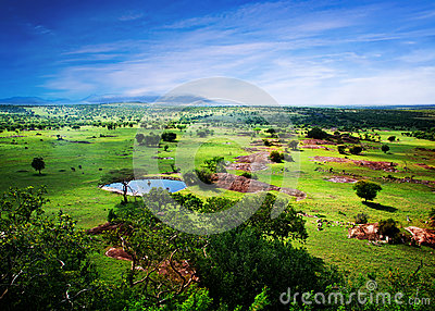 Savanna in bloom, in Tanzania, Africa panorama