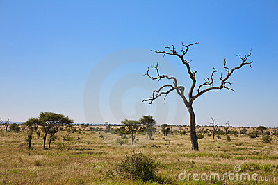Savanna bush veld with trees, South Africa