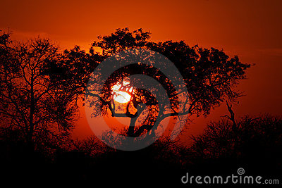 Savanna sunset, Kruger park, South Africa