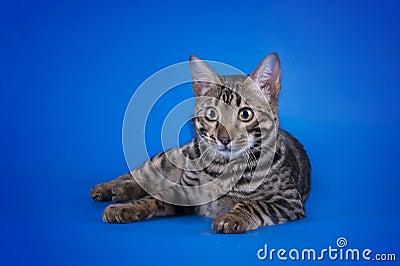 mad cat mechwarrior
