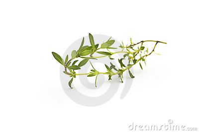 Savory isolated on white