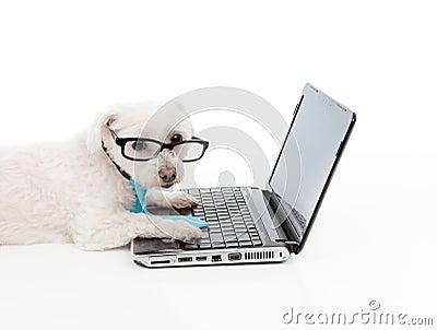 Savvy dog using a computer laptop