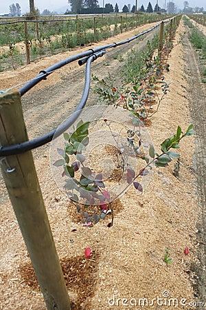 Sawdust Mulch