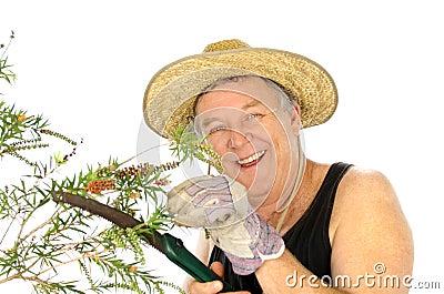 Sawing Gardener