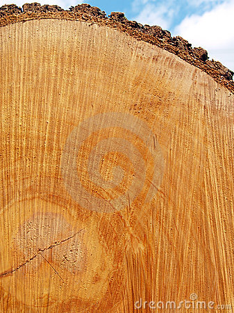Free Sawn Log Texture; Red Oak Stock Photo - 6419370
