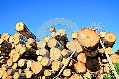 Sawn up tree