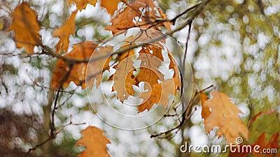Scène de la nature de feuilles jaunes légèrement émouvantes par la brise aérienne contre le ciel maussade Couleurs d'automne aux  clips vidéos
