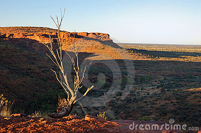 Scène type d Australien à l intérieur (Canyon du Roi)