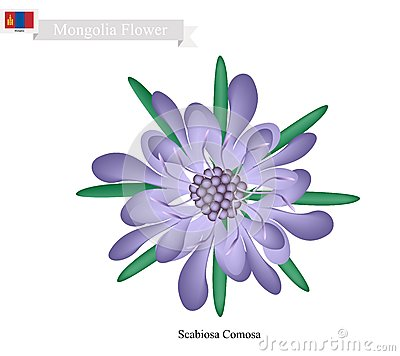 Free Scabiosa Comosa Flower, The National Flower Of Mongolia Stock Photo - 70745080