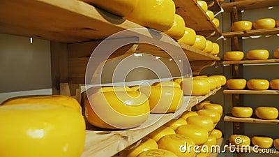 Scaffali con i cerchi del formaggio dell'azienda agricola archivi video