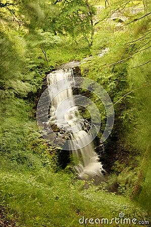 Scalebar Force, falling into the ravine,