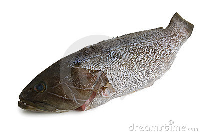 Scaled  grouper fish