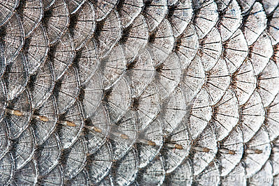Scales of fish