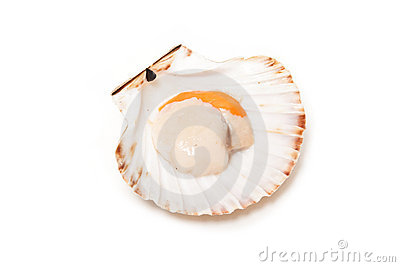 Scallop in its shell