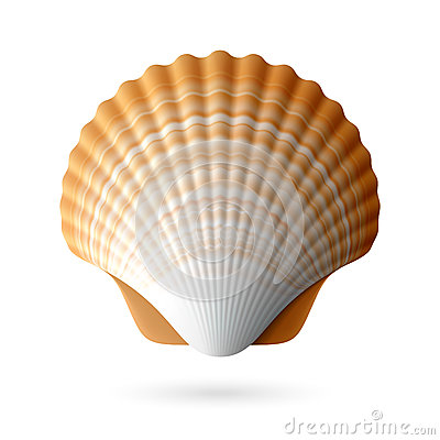 Free Scallop Seashell Stock Photography - 31887542