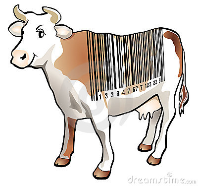 Scan cow