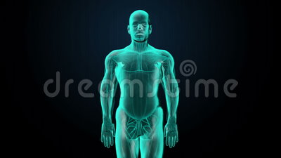 Scanning blood vessel in male body. X-ray view. Scanning blood vessel in male body stock illustration