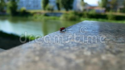 Scarabeo rosso su granito stock footage