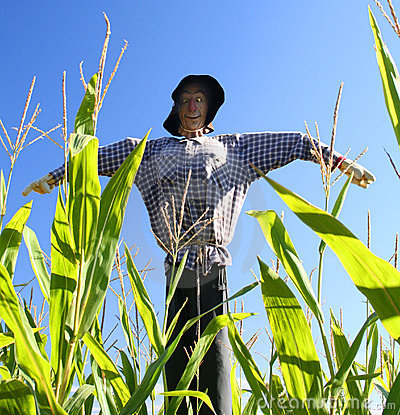 Free Scarecrow Stock Photos - 6713973