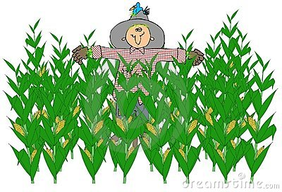 Scarecrow In A Corn Field