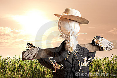 Scarecrow in corn field at sunrise