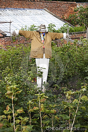 Scarecrow in a fruit garden