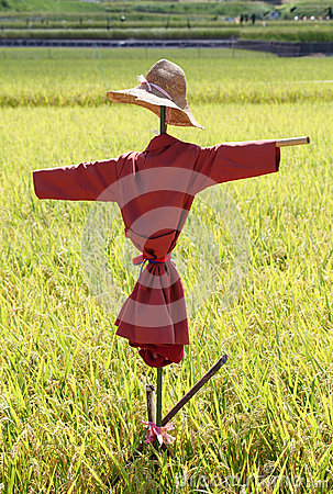 Free Scarecrow On The Rice Field Stock Photo - 33094670