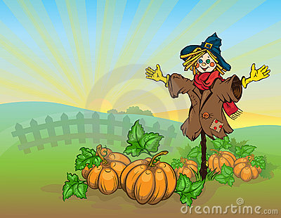 Scarecrow and pumpkins.
