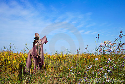 Scarecrow on a rice field