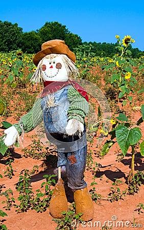 Scarecrow in sunflower field