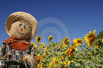 Scarecrow in the Sunflower Forest